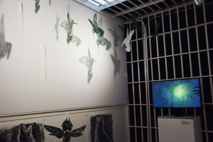 "Hummingbirds and video installation in Poli Marichal's ""Sin Fronteras""."